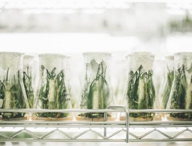 3 Pieces of CBD Research You Can't Ignore