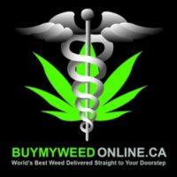 Buy My Weed Online logo