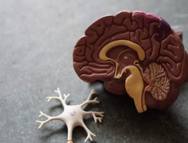 CBD May Protect Against Stroke Memory Loss and Brain Damage