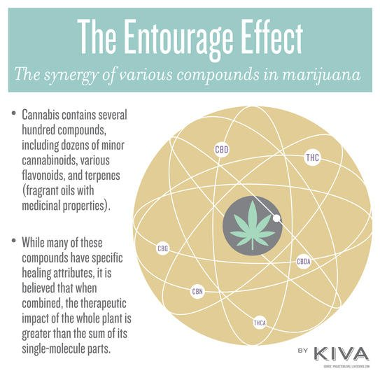 The Entourage Effect [Everything You Need To Know] | CBD Nerds