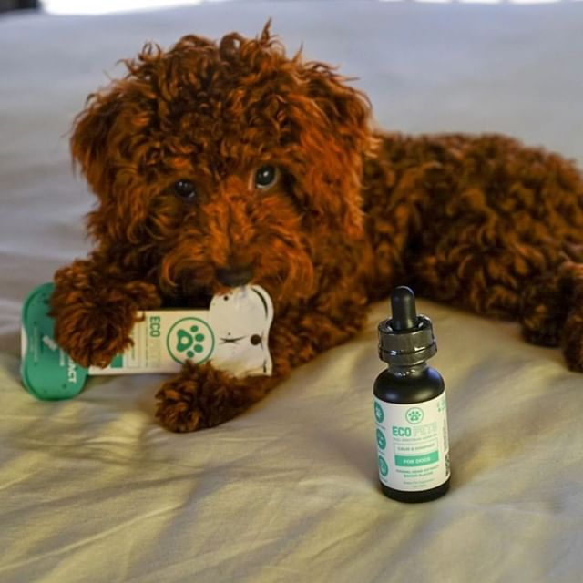 CBD Drip CBD Pet Products