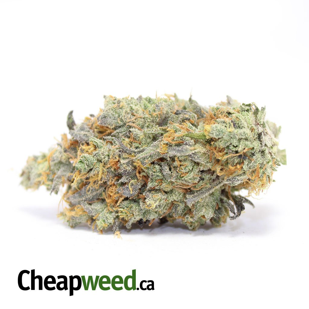 Cheap Weed Purple Cookies Sativa